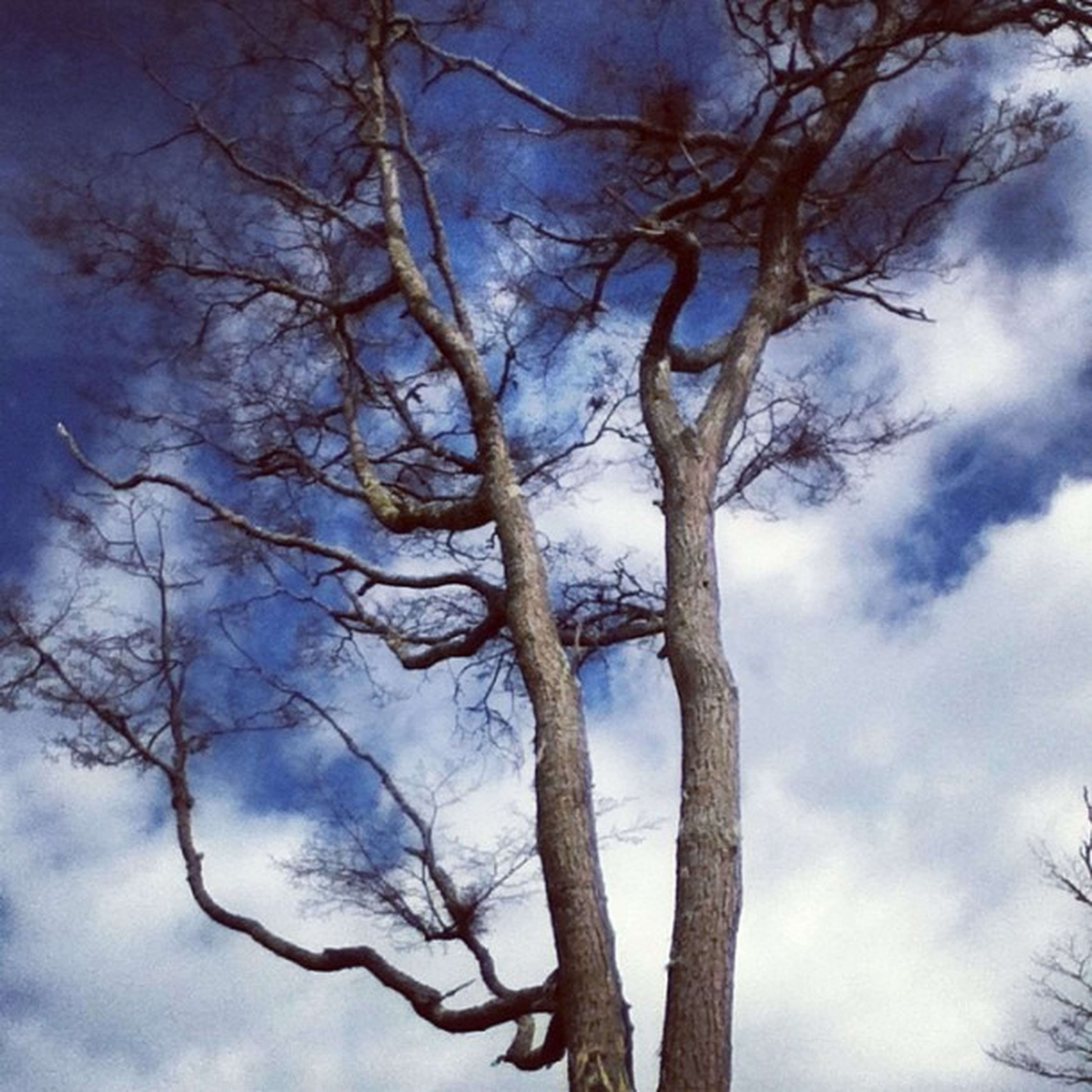 bare tree, branch, tree, low angle view, sky, tranquility, nature, winter, cloud - sky, cold temperature, beauty in nature, snow, weather, scenics, cloudy, tranquil scene, tree trunk, cloud, outdoors, day