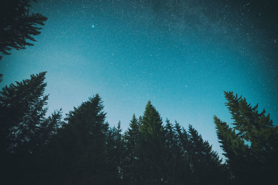 Beautiful stock photos of background, star - space, astronomy, tree, night