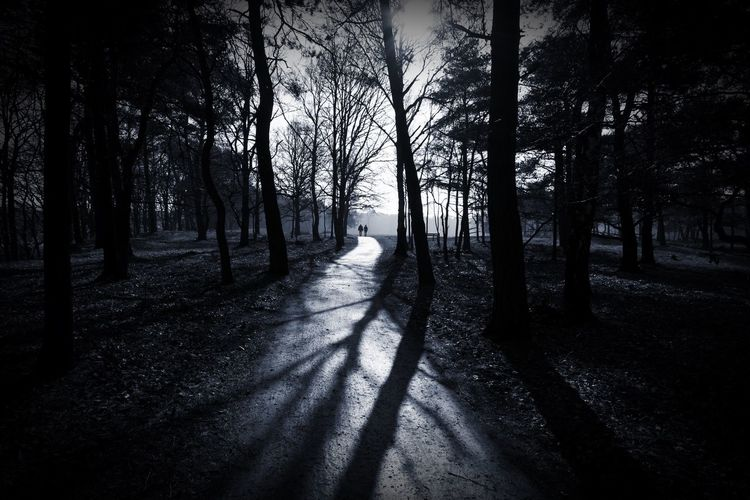 Treetastic Walking Together Togetherness Monochrome Monochrome_Monday Blackandwhite Landscape In The Forest Silhouettes Treegasmic Tuesday