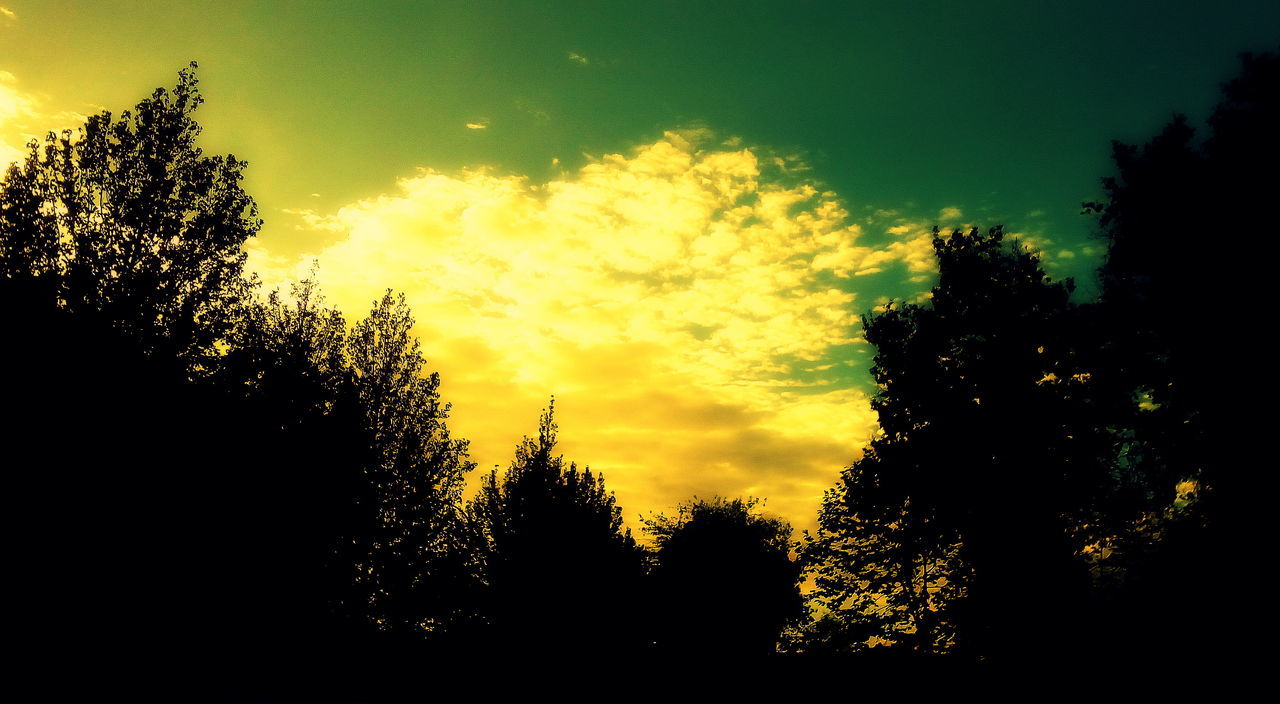 tree, silhouette, nature, sunset, beauty in nature, no people, scenics, tranquil scene, tranquility, sky, growth, yellow, outdoors, forest, day