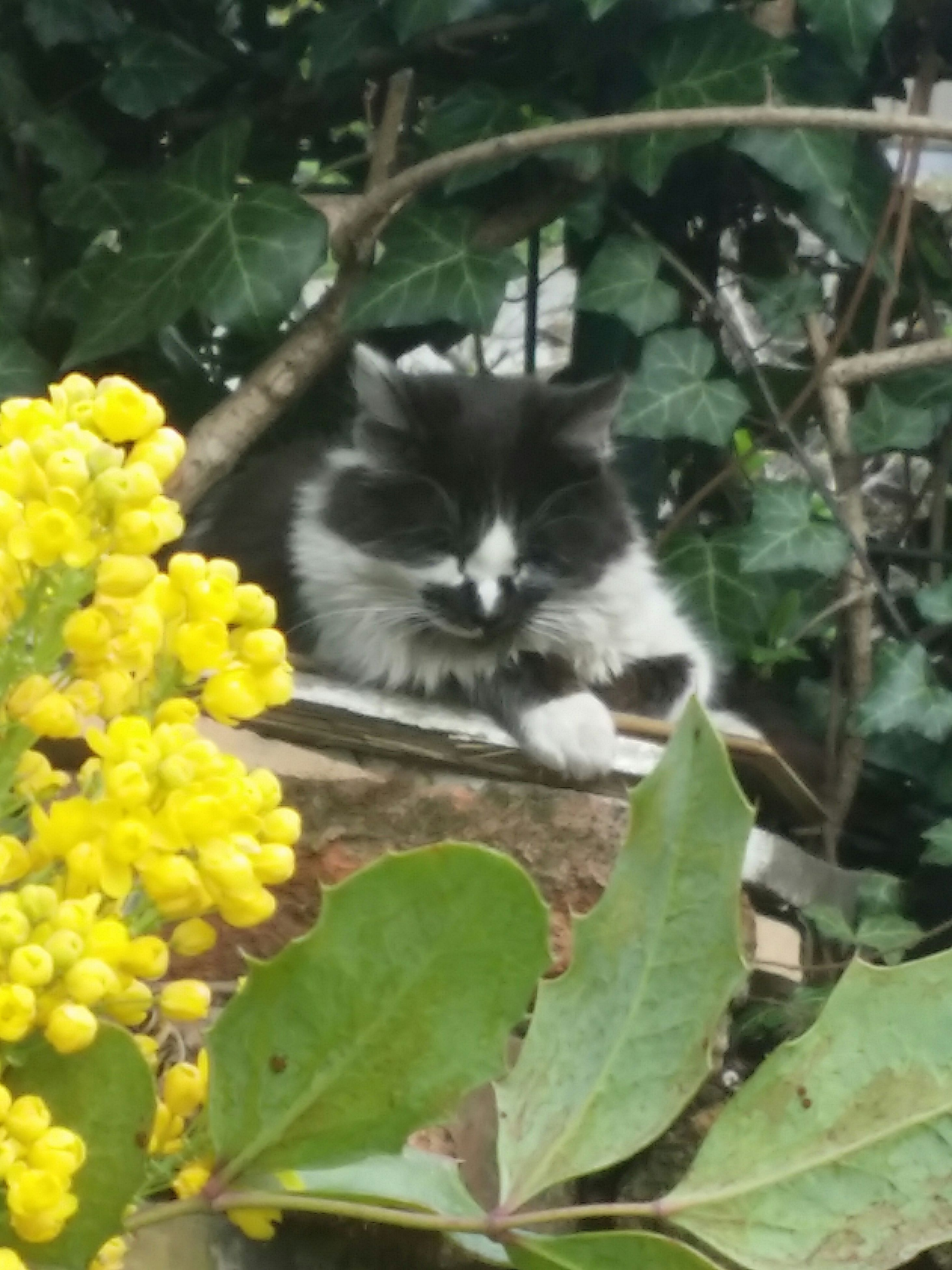 one animal, animal themes, domestic cat, cat, flower, pets, yellow, mammal, leaf, feline, plant, growth, domestic animals, whisker, wildlife, nature, close-up, focus on foreground, animals in the wild, sitting