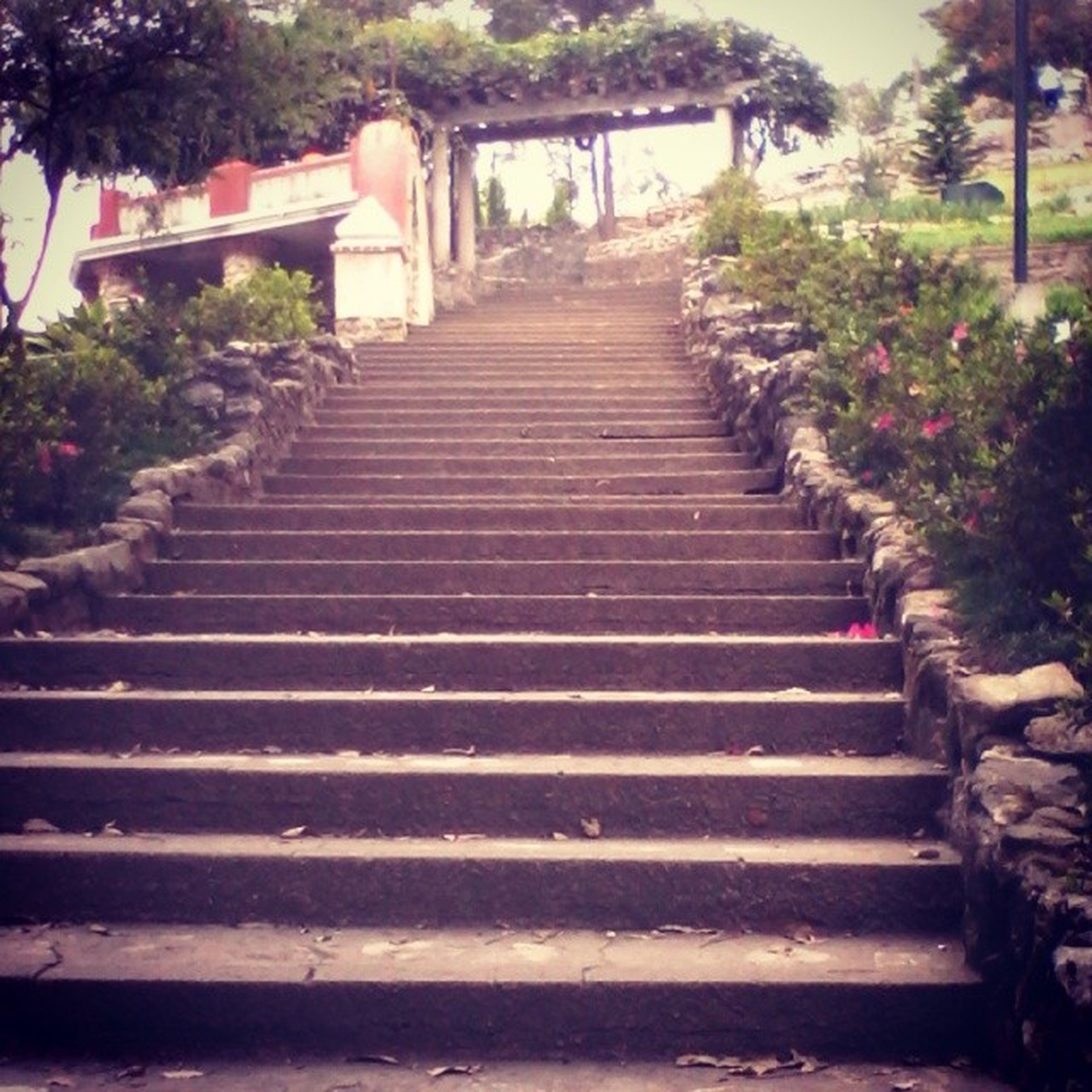 steps, steps and staircases, staircase, the way forward, tree, railing, stairs, diminishing perspective, growth, plant, built structure, leading, park - man made space, day, outdoors, vanishing point, no people, sunlight, nature, walkway