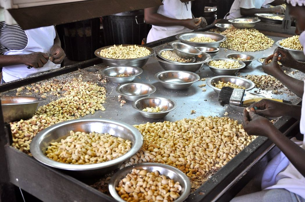 Processing Quality Peeling Shelling Kernels Kernel Raw Nuts Organic Plants Sorting  Healthy Healthy Eating Healthy Food Cleaning Sort Out Organic Organic Food Organic Farming Harvest Harvesting Cashew Farm Cashew Africa Ghana Cashews Cashew Nuts