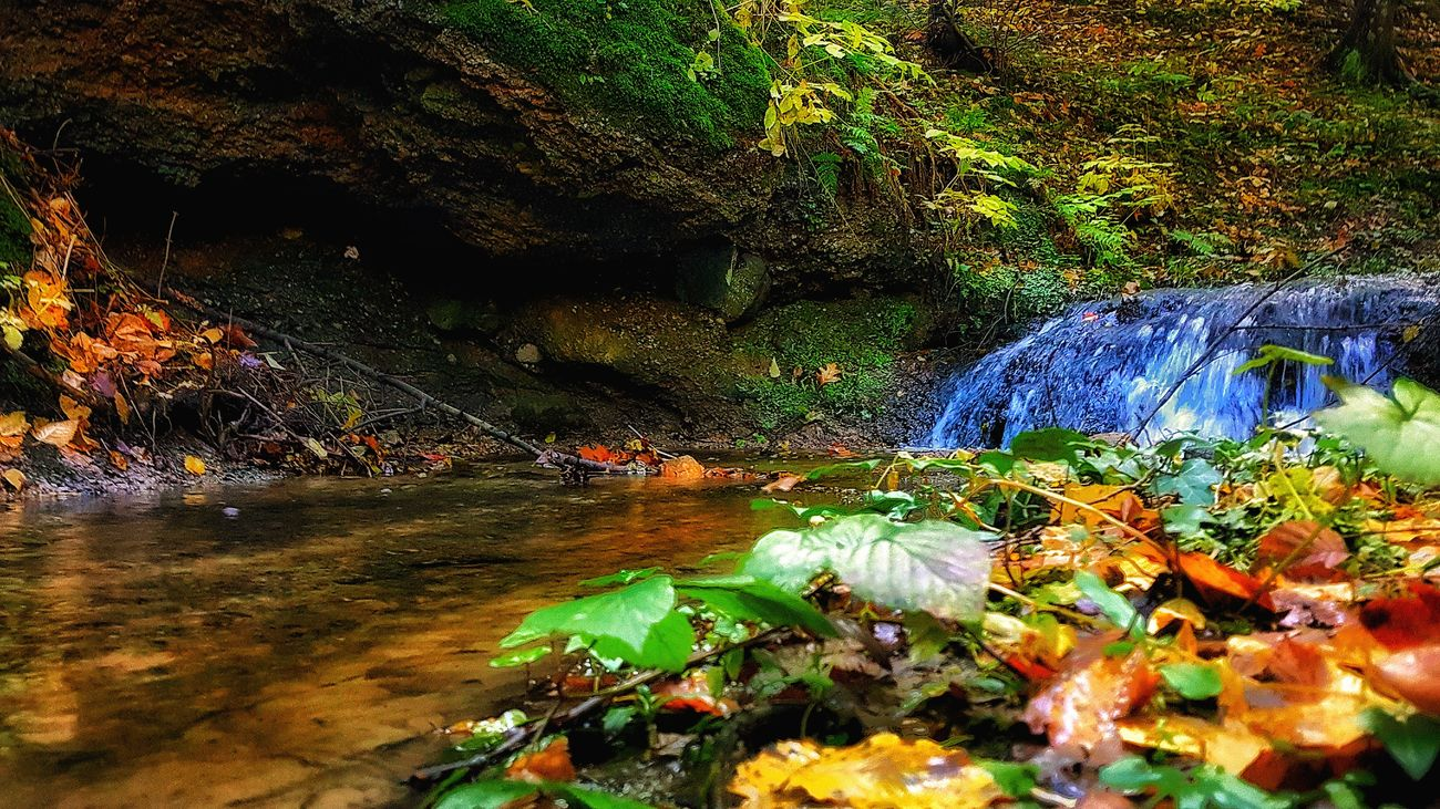 Autumn Beauty In Nature Day Fall Green Color Growth Leaf Nature No People Outdoors Plant Poland Tree Water Waterfall