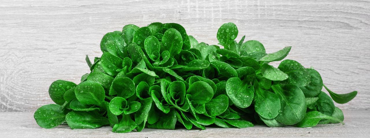fresh & healthy lamb's lettuce Corn Salad Freshness Healthy Lamb's Lettuce Salad Feldsalat