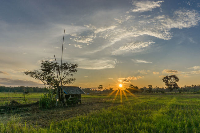 Yesterday Sunset Landscape Field Scenics Tranquil Scene Sun Rural Scene Tranquility Tree Agriculture Beauty In Nature Sunbeam Sky Growth Farm Sunlight Plant Crop  Nature Non-urban Scene Sun Star Star Burst Outdoors