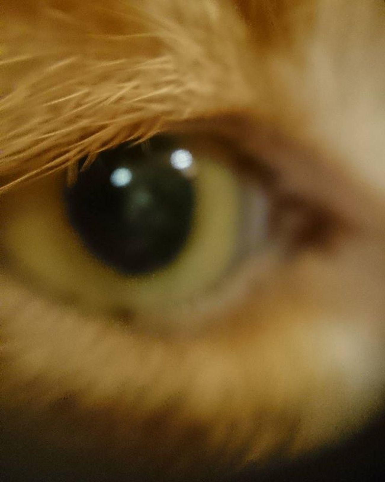 Catwatch Iamwatchingyou Hello Pepetheredcat Catphoto Catmoment Catlife Justicat Catsofinstagram Worlddofcats