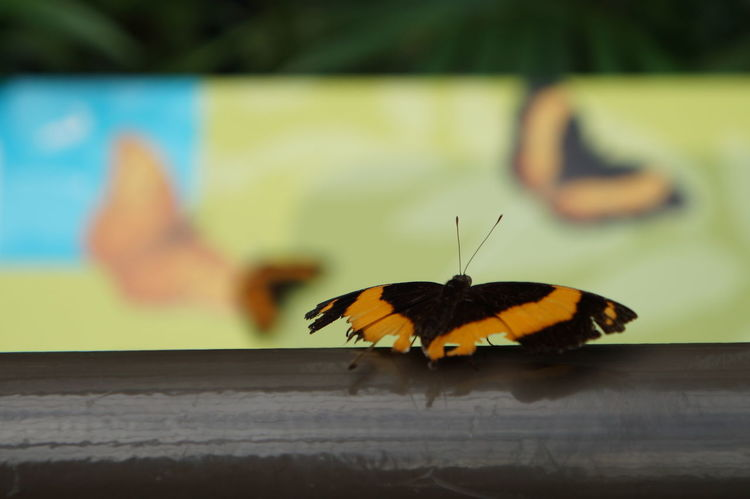 EyeEm Best Shots Tranquility Nature Check This Out Australia No People Beauty In Nature EyeEm Nature Lover Butterfly Insect