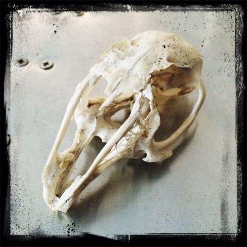MerryChristmas Skulls Life Is Still Delicate