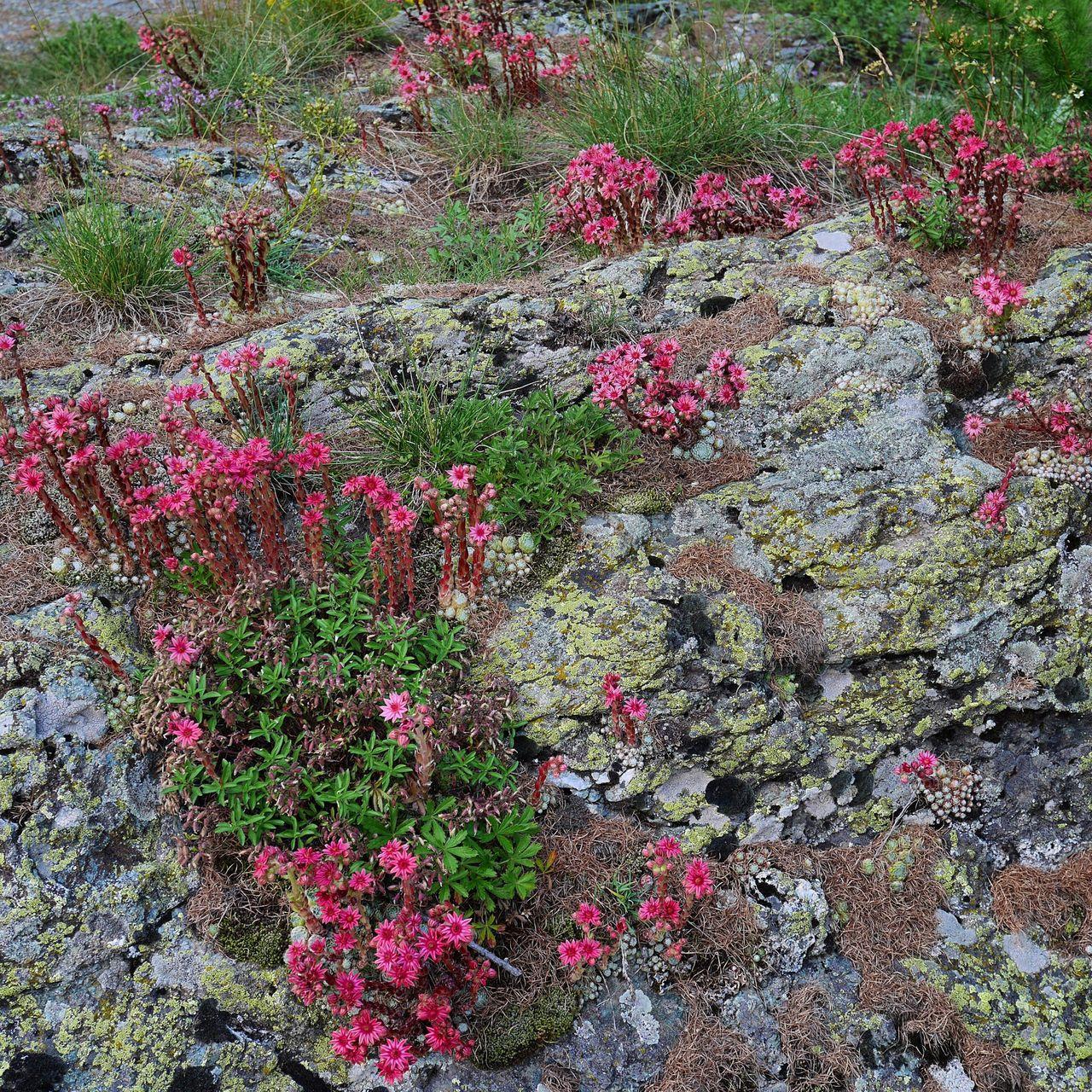 Pink wildflowers growing on field