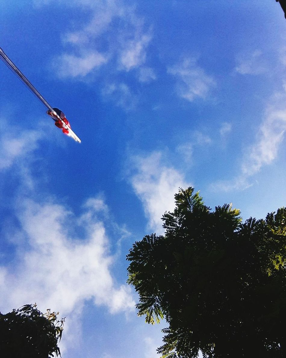Up look Sky Outdoors No People Beauty In Nature Thai Flag Cloud - Sky Tree Day Nature Lamphun ,Thailand Skylover