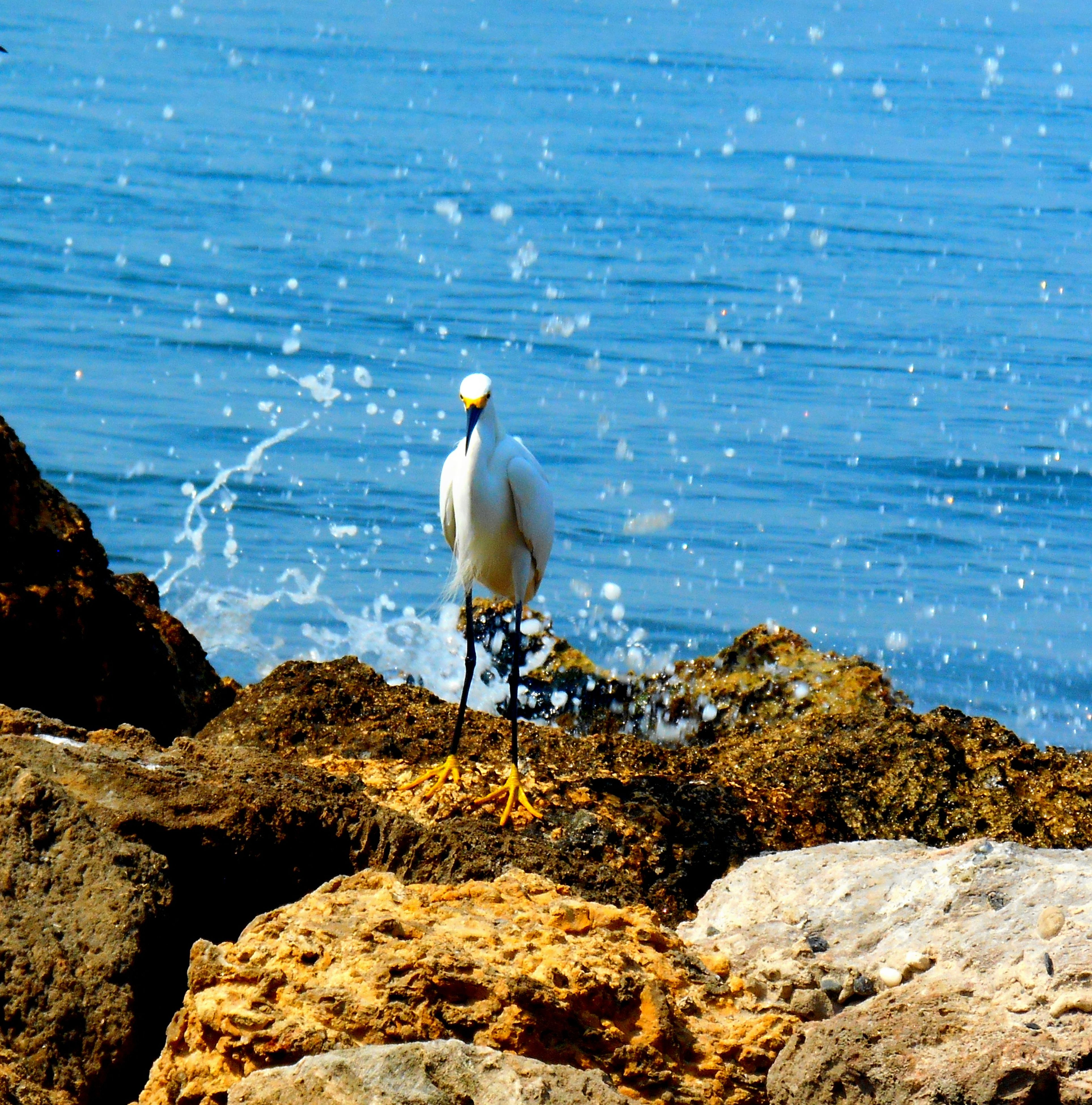 bird, animal themes, animals in the wild, wildlife, water, rock - object, one animal, sea, perching, nature, full length, seagull, beauty in nature, blue, rock, day, sunlight, outdoors, beak, tranquility