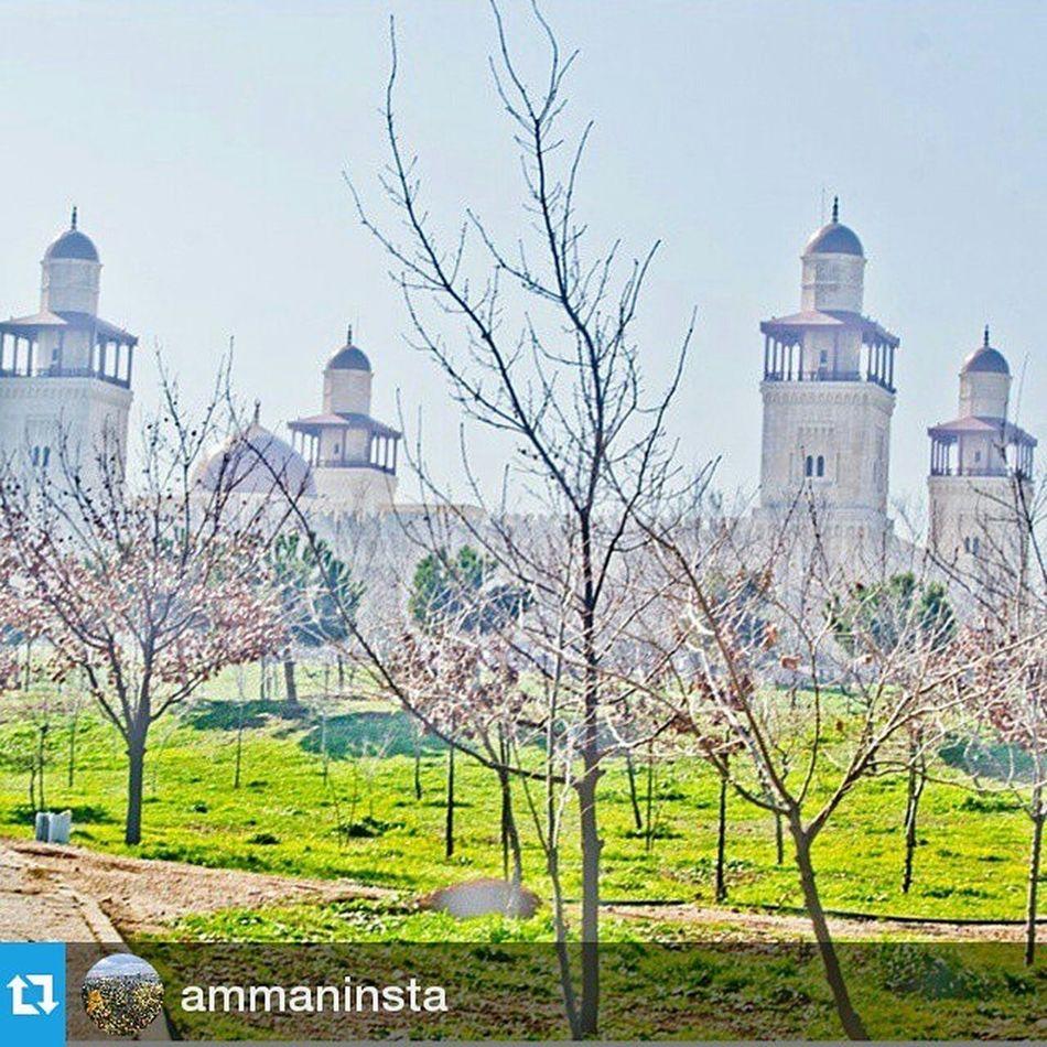 Thank you @ammaninsta Repost @ammaninsta ・・・ By @motasemash Ammaninsta Amman Jordan amm