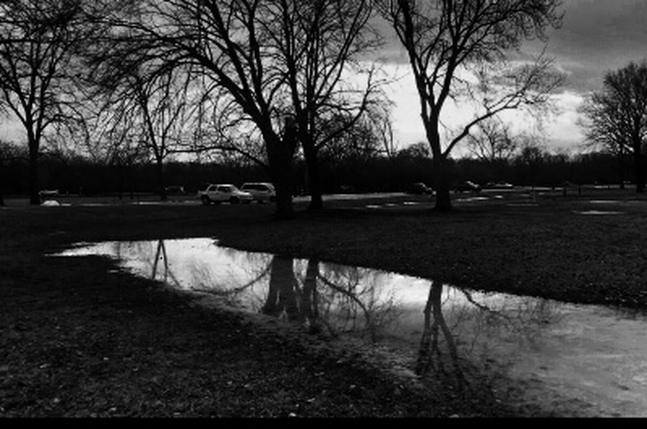 tree, reflection, bare tree, water, grass, nature, outdoors, lake, tranquility, puddle, scenics, travel destinations, no people, branch, beauty in nature, day, sky