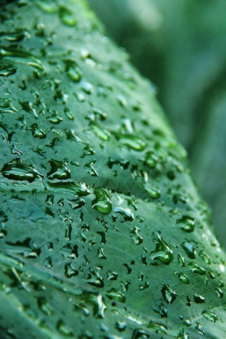 Leaf Waterdrops Rainforest Green