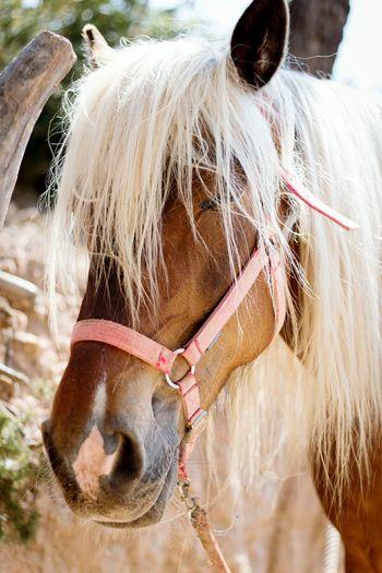 Ibiza Horse Paard