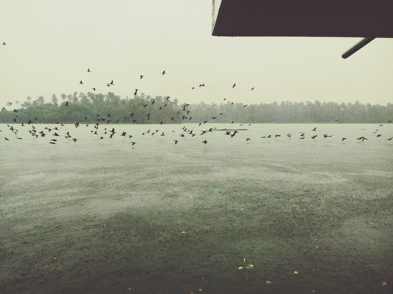 Taking Photos The BIRDS!! Finding Food Hope For Food a rainy day The Lake>>>> Ashtamudilake Kollam