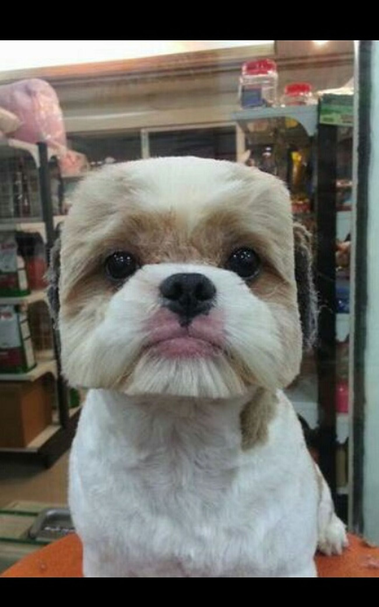 Dog Smile Sweetly <3 Minecraft Bite Me çipilçipil Japan Berber  Cut Hairstyles