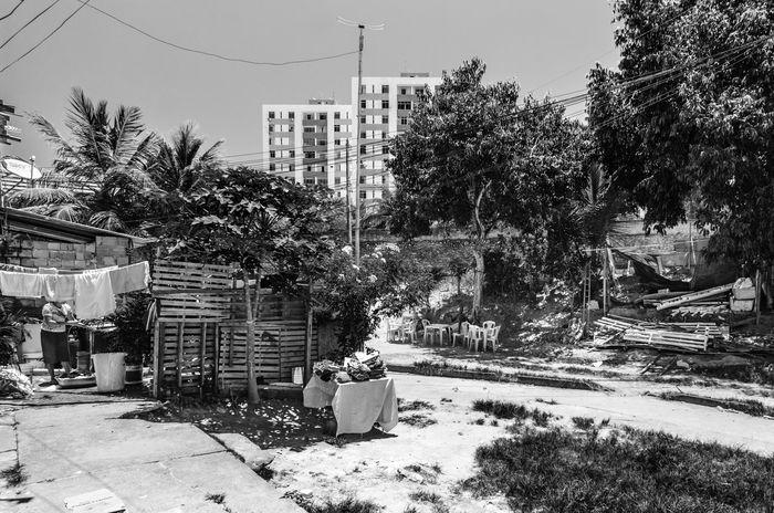 Duas Verdades da Cidade Adapted To The City Adult Bahia Brasil City Favelas Outdoors Salvador Social Issues Tree Women