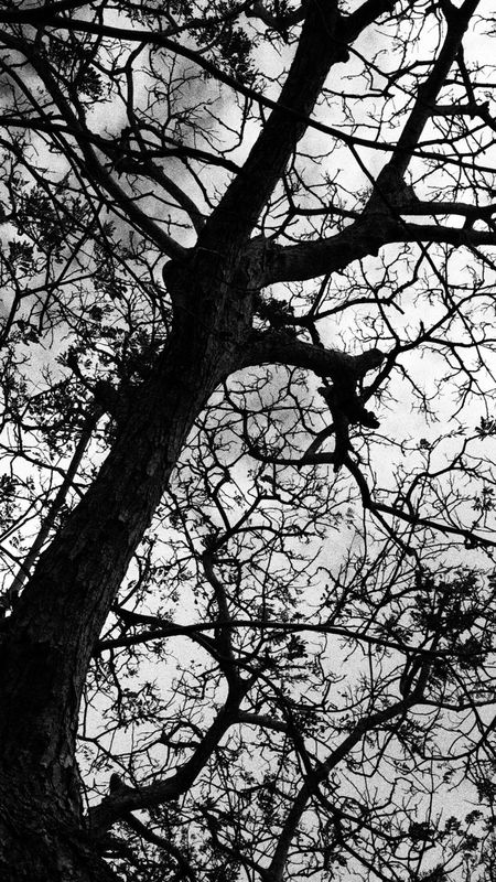 Tree Tree Branches Tree Trunk Dark Blackandwhite Dead Tree Dead Creepy Loneliness Wither Withered  Withered Tree Withering Alone Sky Leaves Web Horror Showcase: March Twilight Twilightzone IPhoneography Photography In Motion Motus Natura