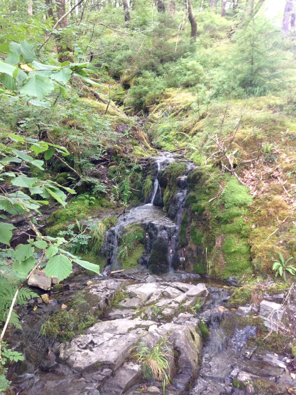 nature, waterfall, rock - object, beauty in nature, no people, plant, growth, day, forest, motion, outdoors, tree, water