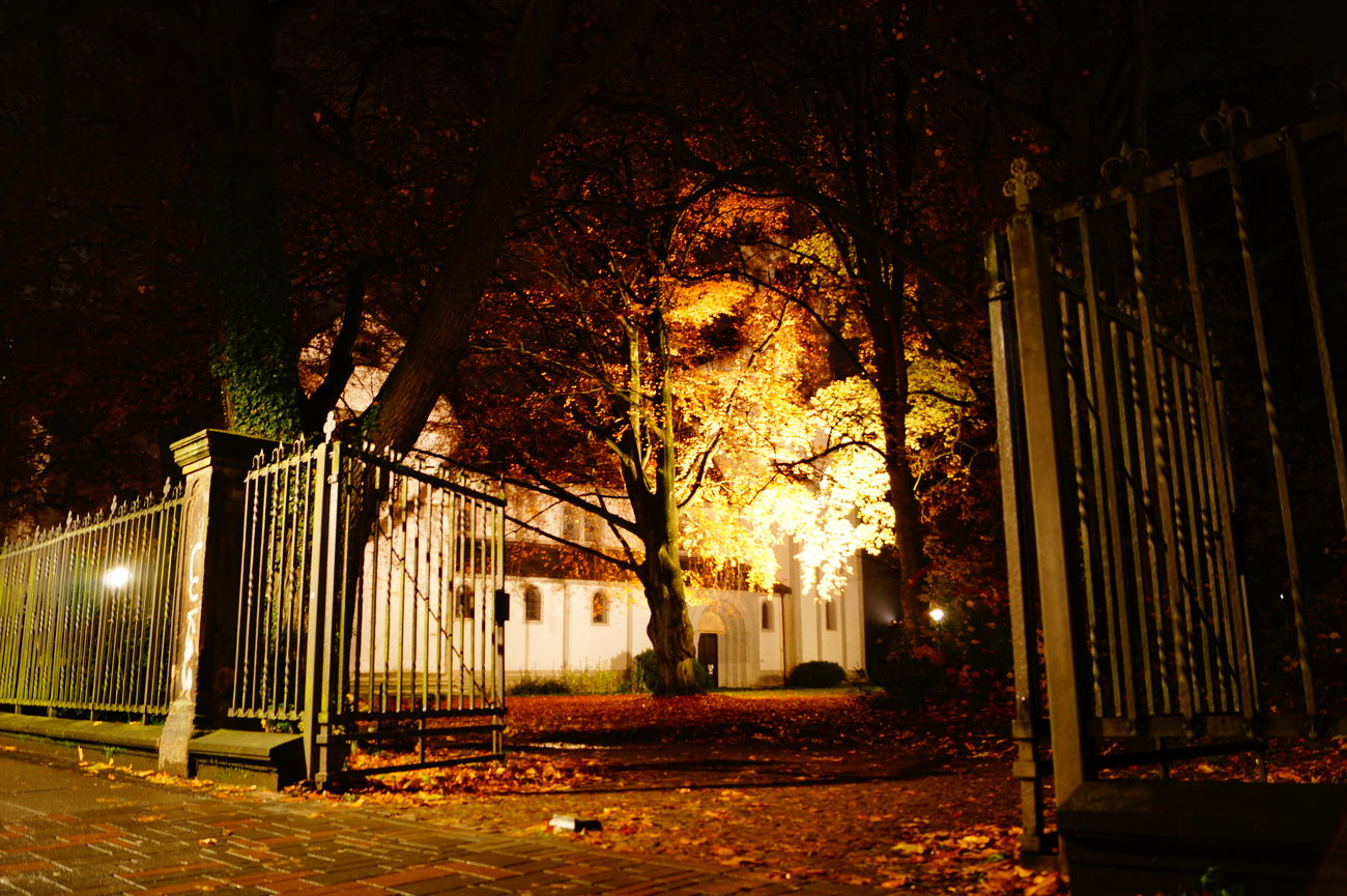 Architecture Beleuchtung Bäume Goslar Kirche Langzeitbelichtung Light No People Goslar