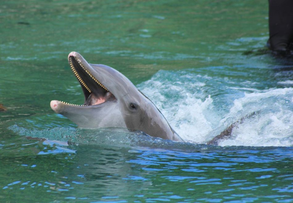Beautiful stock photos of dolphins, Animal Themes, Animals In The Wild, Aquatic Mammal, Beauty In Nature