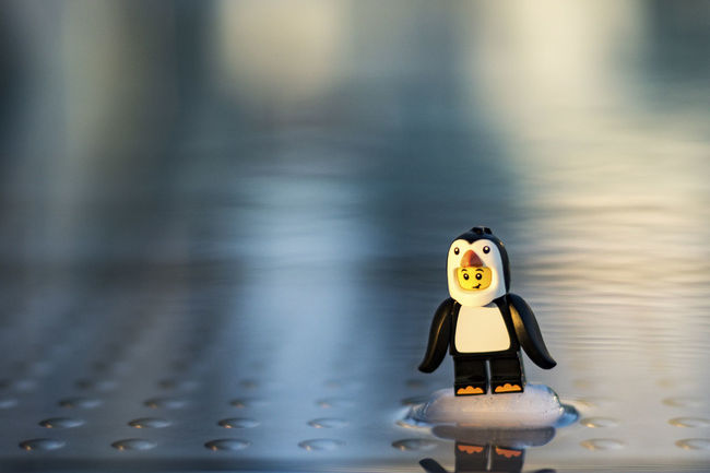 ups where's the ice disappeared Creativity Ice Ice Age Last Man Standing Lego Minifigures Pinguin Reflection Smile Toy