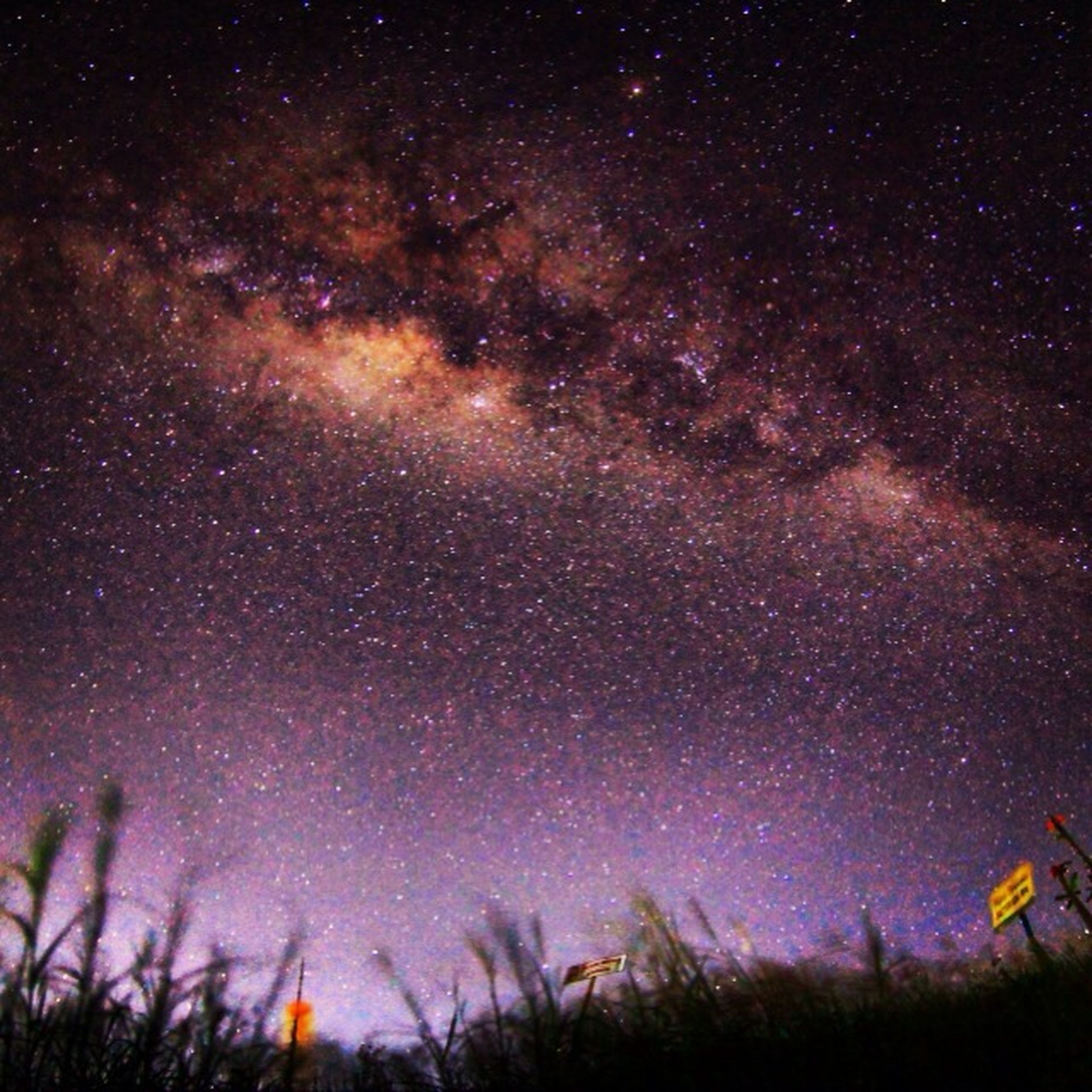 star - space, night, star field, galaxy, astronomy, star, sky, scenics, beauty in nature, tranquility, space, tranquil scene, low angle view, nature, infinity, milky way, constellation, tree, idyllic, no people