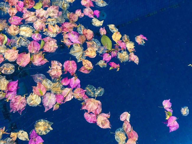 Flower Pink Color Water Floating On Water Fragility Nature Freshness Blossom Beauty In Nature Pink Petal Growth Springtime Color Enhanced In Bloom Water Lily Tranquility Day Green Outdoors