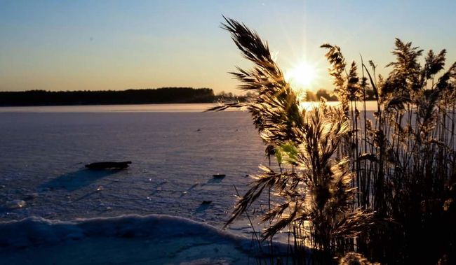 Taking Photos Check This Out Hello World Enjoying Life Water_collection Sunlight Sunset Frozen Nature_collection Love Nature River Sun Grass Snow Winter Freezing Cold It's Cold Outside