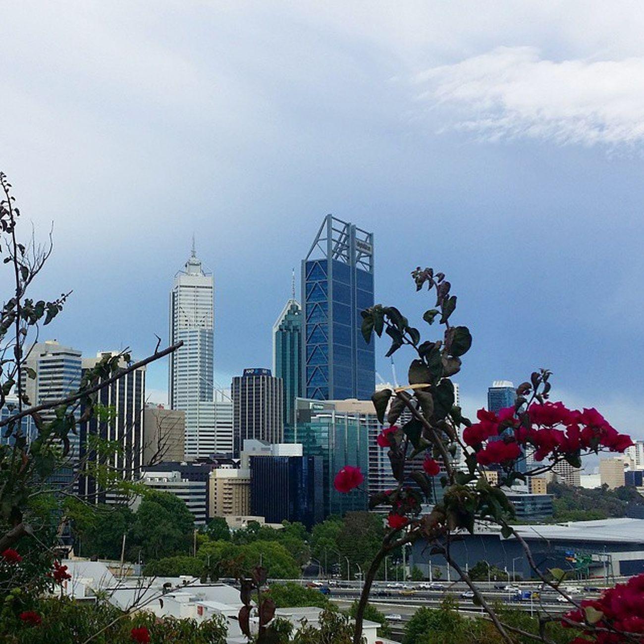 Crawled up a gruelling Jacob's Ladder for this skyline Worthit Perth Travel Australia seeaustralia WA Kingspark