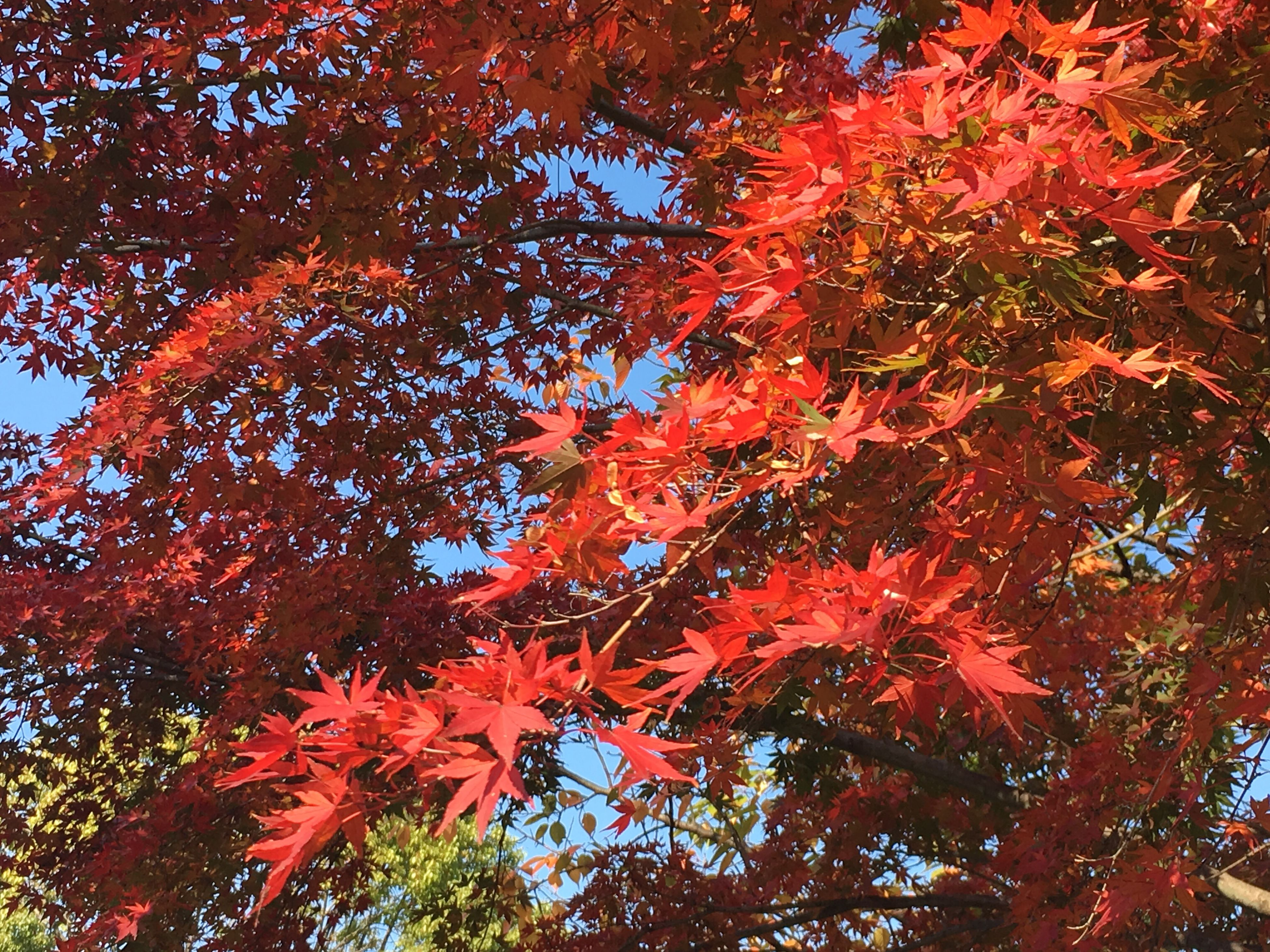 red, nature, tree, full frame, growth, no people, beauty in nature, outdoors, day, close-up