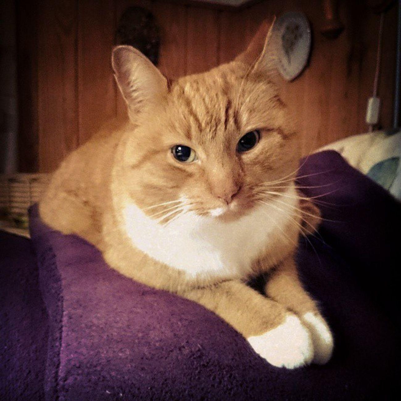 Suomi Syksy Kissa Lokakuu rauhallinen tyytyväinen punakeltainen lepohetki finland autumn cat october nap sonyxperia xperia Z2