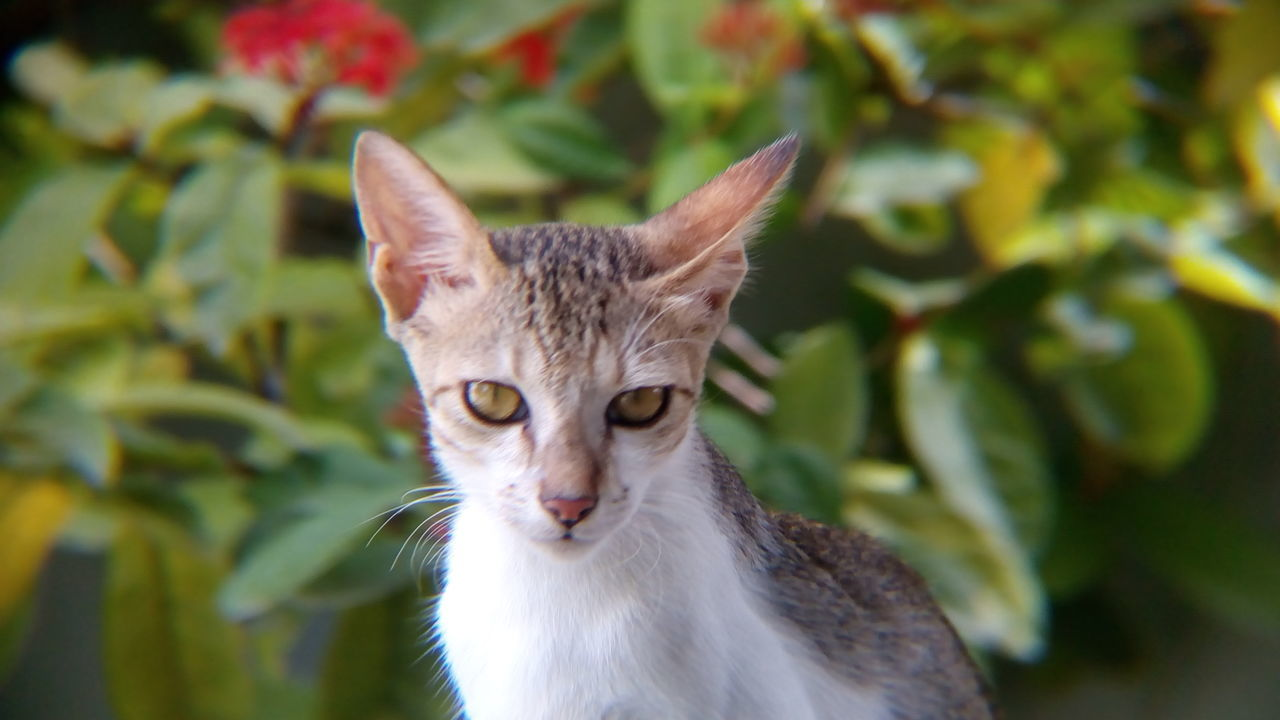 domestic cat, one animal, animal themes, feline, mammal, portrait, cat, looking at camera, pets, leaf, domestic animals, whisker, focus on foreground, plant, no people, day, close-up, outdoors, nature
