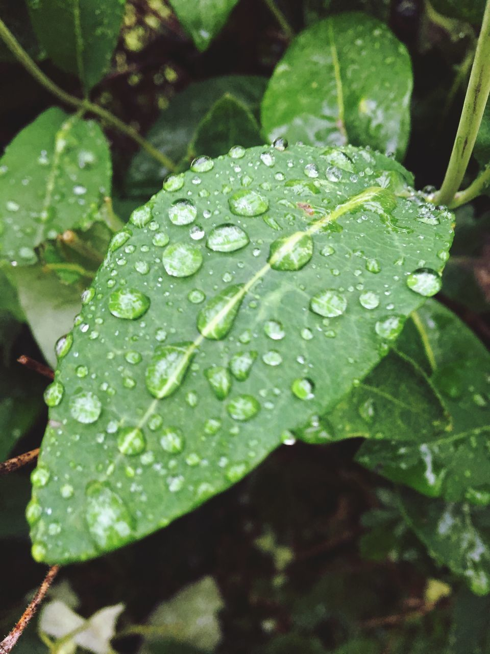 drop, leaf, green color, water, wet, raindrop, close-up, growth, nature, no people, freshness, plant, day, fragility, outdoors, beauty in nature, periwinkle