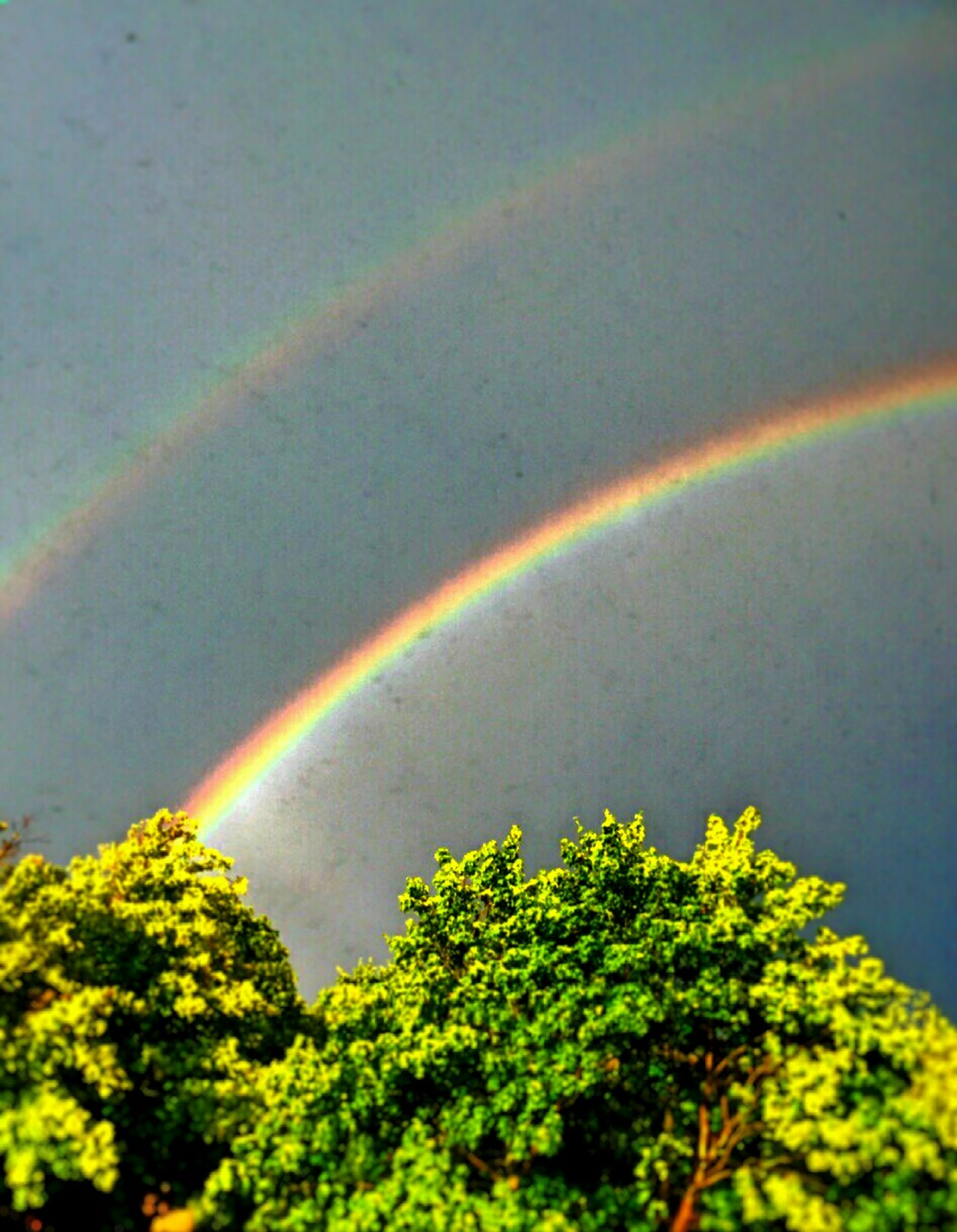 rainbow, multi colored, beauty in nature, scenics, sky, tranquil scene, tranquility, green color, nature, tree, idyllic, growth, landscape, outdoors, cloud - sky, green, lush foliage, no people, weather, colorful, plant, day, majestic, non-urban scene, remote, cloud, cloudy