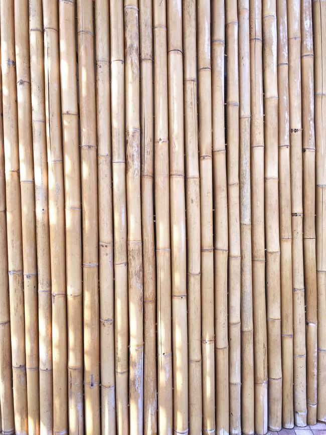Bamboo Wall Bamboo Bamboo Art Bamboo Trees Bamboo Fence Bamboo Wall Bamboo Partition Bamboo - Plant Backgrounds In A Row Yellow Bamboo - Material Large Group Of Objects Arranged Repetition Arrangement