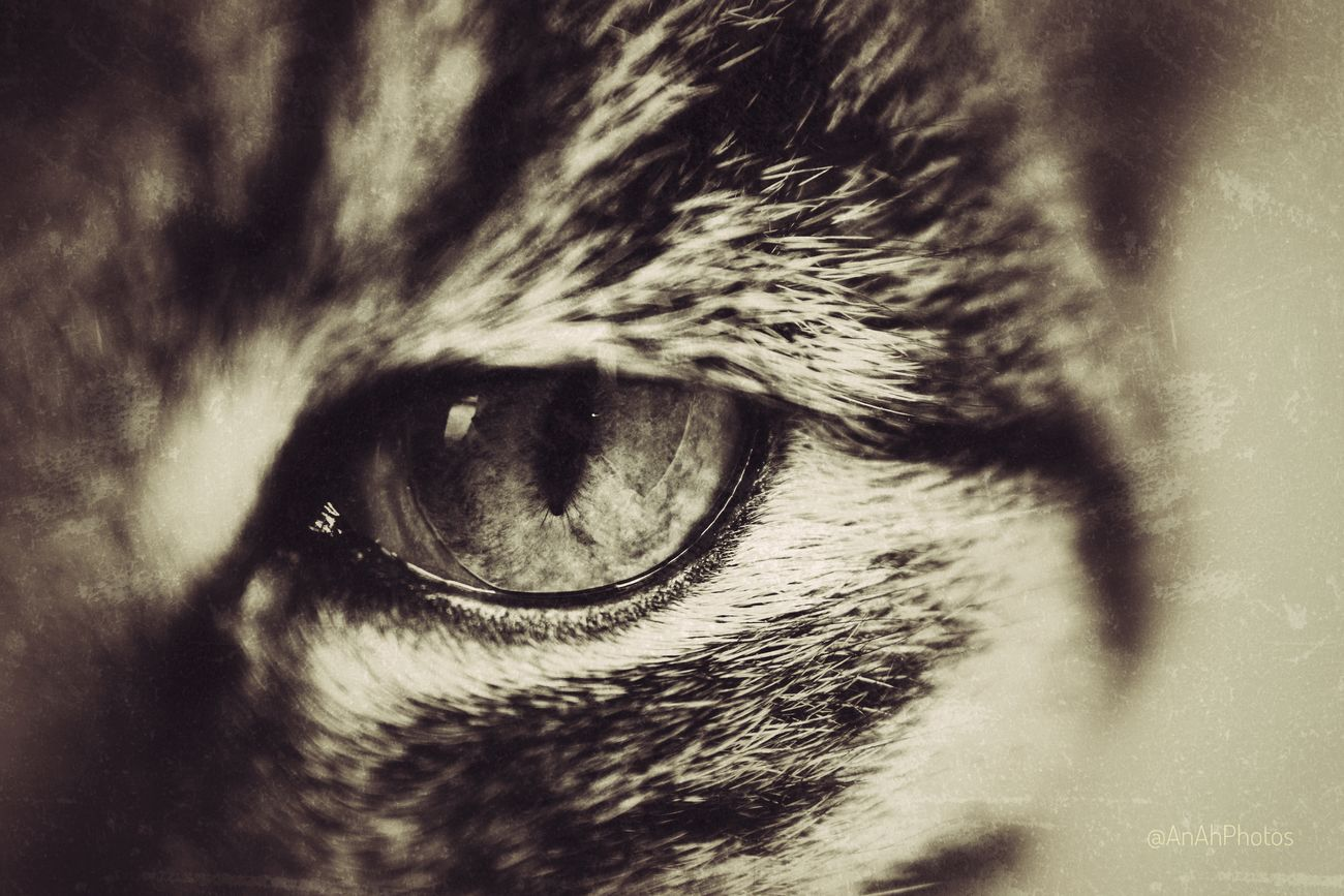 🐱 Cats 🐱 Cateyes Cats Of EyeEm Cat Eyes Cat Lovers Close-up Textured  Sepia Sepiastyle Focus On Foreground Animal Themes Editing Photos Sepia Photography