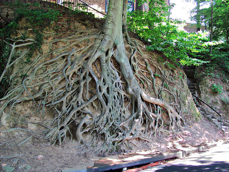 Beauty In Nature Branch Day Exposed Roots Eye4photography  Green Color Natural Landmark Nature No People Non-urban Scene Outdoors Scenics Tourism Tranquil Scene Tranquility Tree Tree Trunk Water