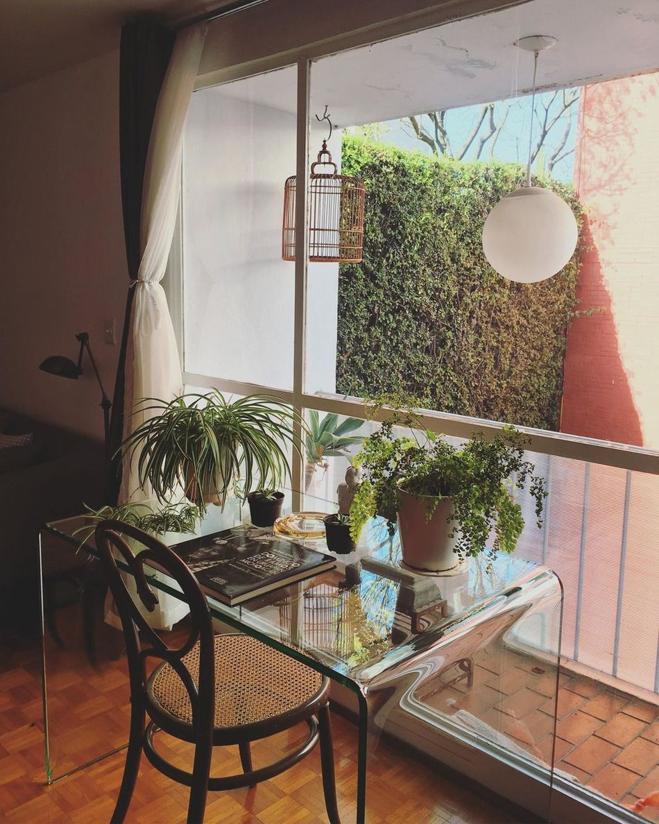 Architecture Chair Day Decor Decoration Growth Home Interior Indoors  Interior Design Nature No People Plant Table Window