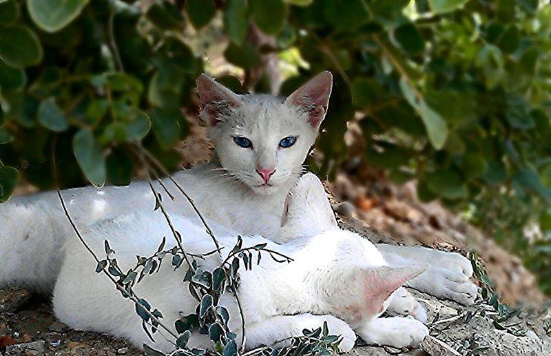 Cat Streetphotography Eye4photography  Eyem Nature Lover