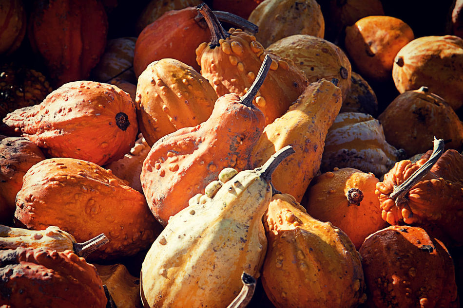 Agriculture Background Texture Backgrounds Countryside Food Food And Drink Freshness Gourd Halloween Harvest Healthy Lifestyle Nature No People Orange Color Organic Pattern Pumpkins Red Rural Squashes Texture