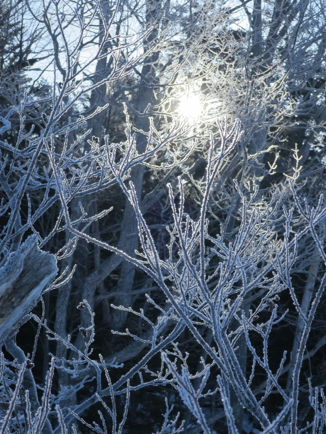 Frozen Nature Frozen Frost Frosty Rime Frosty Trees Frosty Morning Frosted Trees Frozen Tree Winter Beauty In Nature Cold Temperature Cold Days Cold Winter ❄⛄