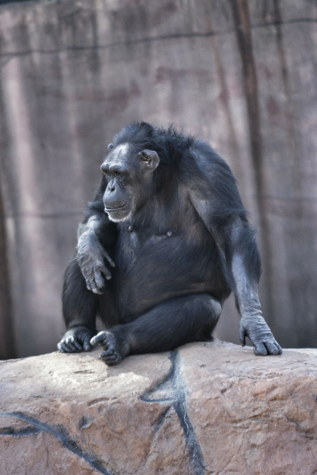 Hanging Out Taking Photos Cheese! Hi! Little Rock Zoo Challenge Yourself Time With My Daughter Little Rock, Arkansas Color Photography Chimpanzee Sitting Pretty