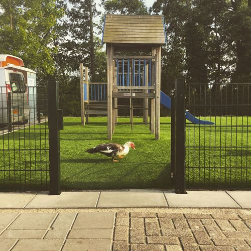 Meanwhile in Holland Holland Playground