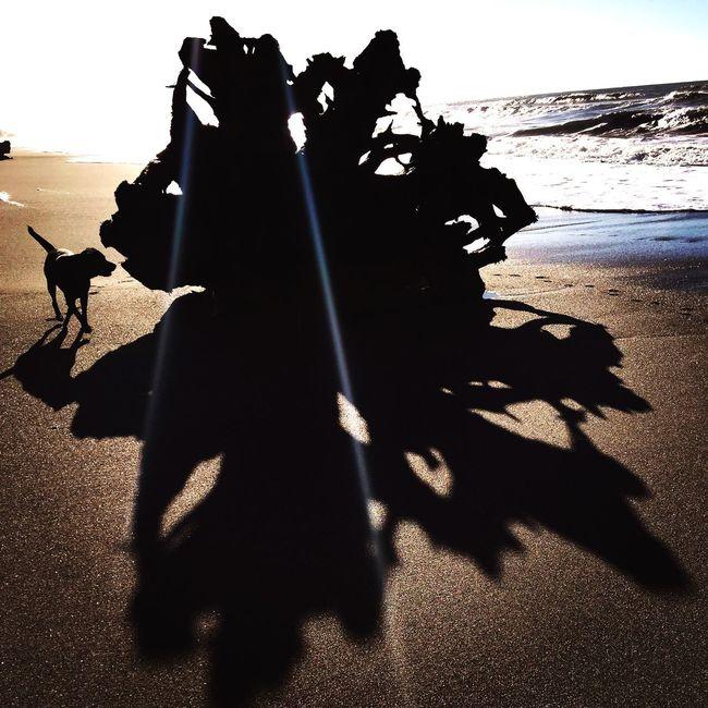 Life's a beach...shadows & all