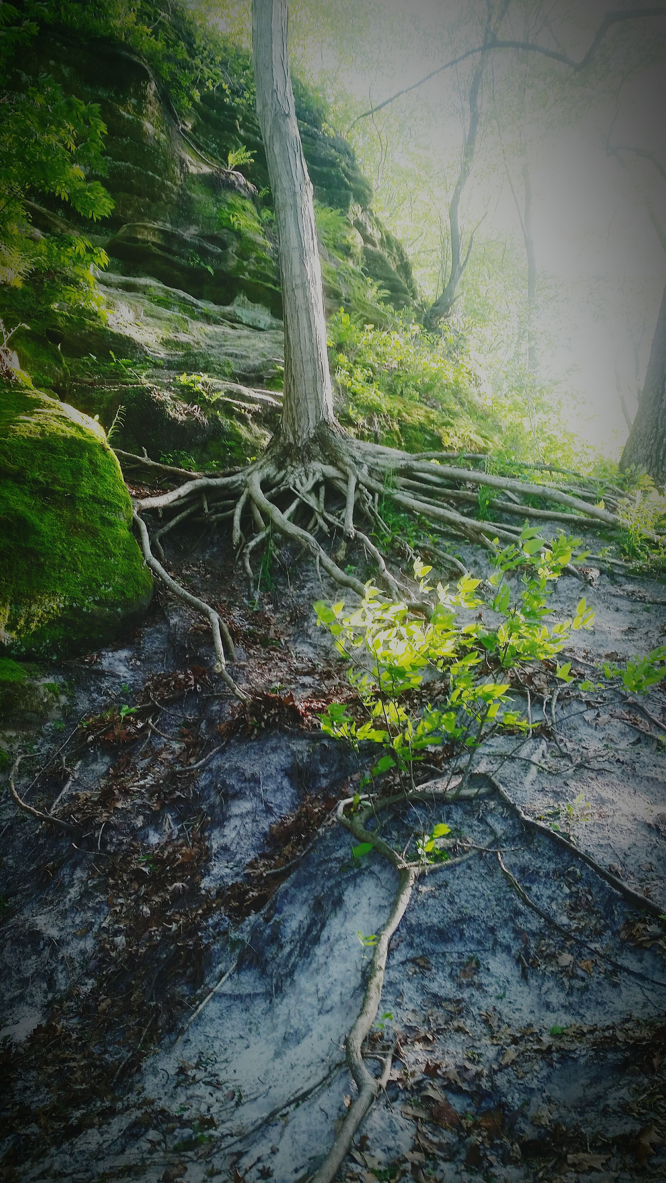 tree, nature, forest, tranquility, day, tranquil scene, beauty in nature, tree trunk, no people, scenics, outdoors, branch, moss, growth, landscape, water