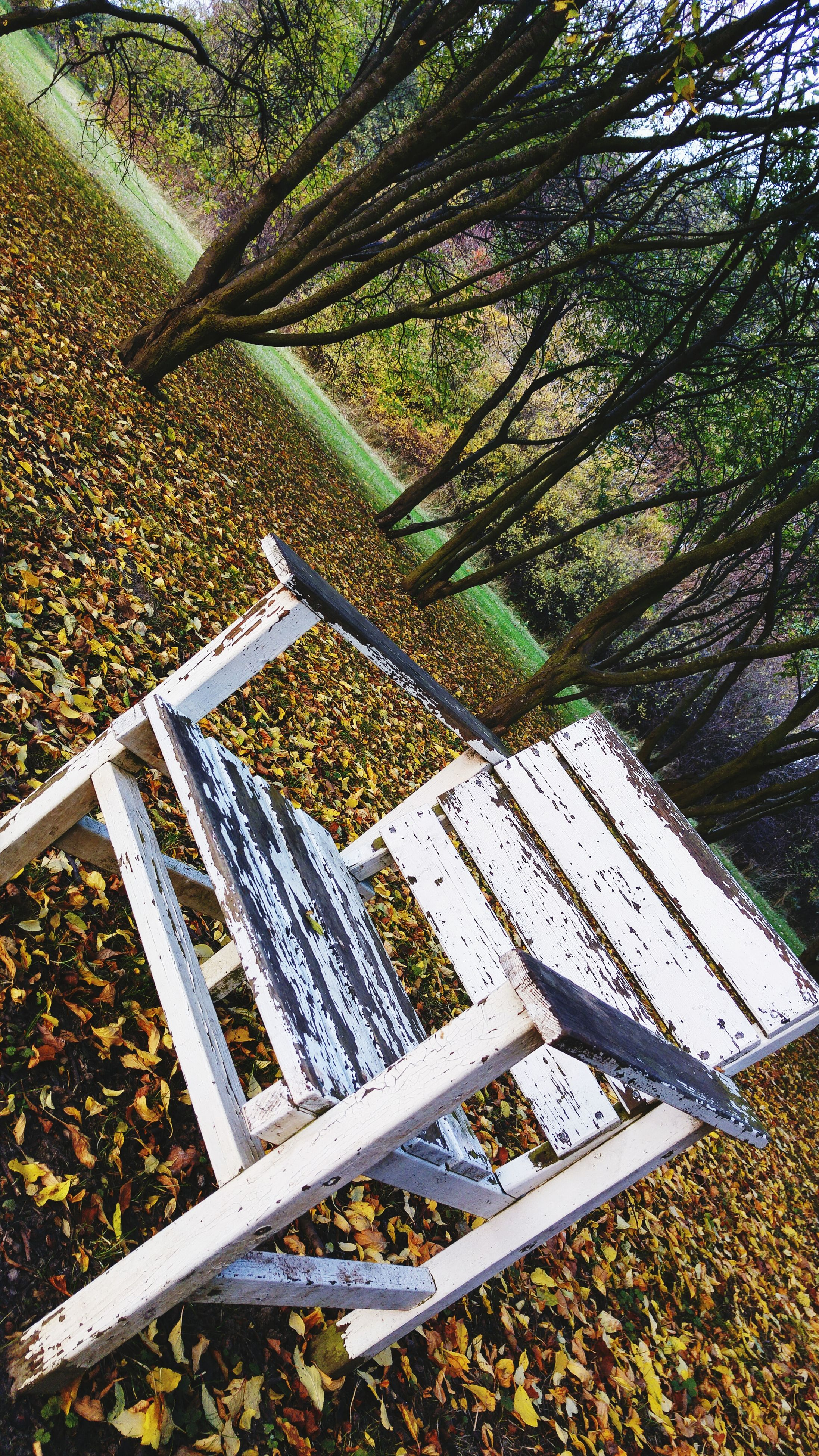 tree, leaf, growth, high angle view, nature, sunlight, day, tranquility, field, park - man made space, autumn, outdoors, abundance, plant, no people, shadow, dry, fence, leaves, fallen