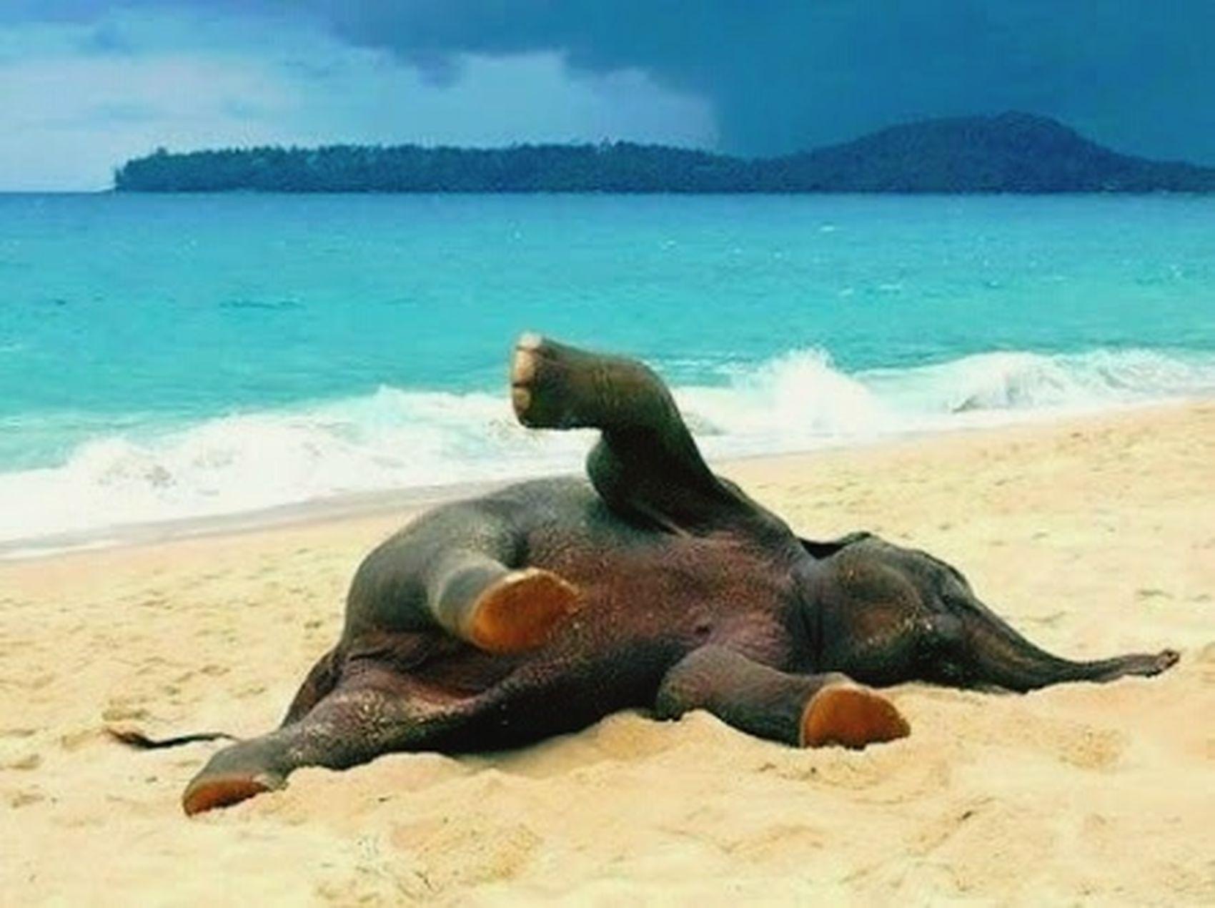 ช้างน้อย.กับทะเลอันกว้างใหญ่